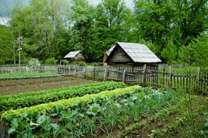big-vegetable-garden-lg