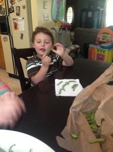 My little green bean snapper