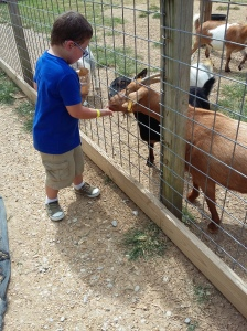 "Mr. Sweetie Pants feeding the goats at the Buffalo Park. From the time he woke up, until the time we arrived at the Buffalo Park, I had heard the word, ""Buffalo"" 9,873,185 times. Not that I was counting."